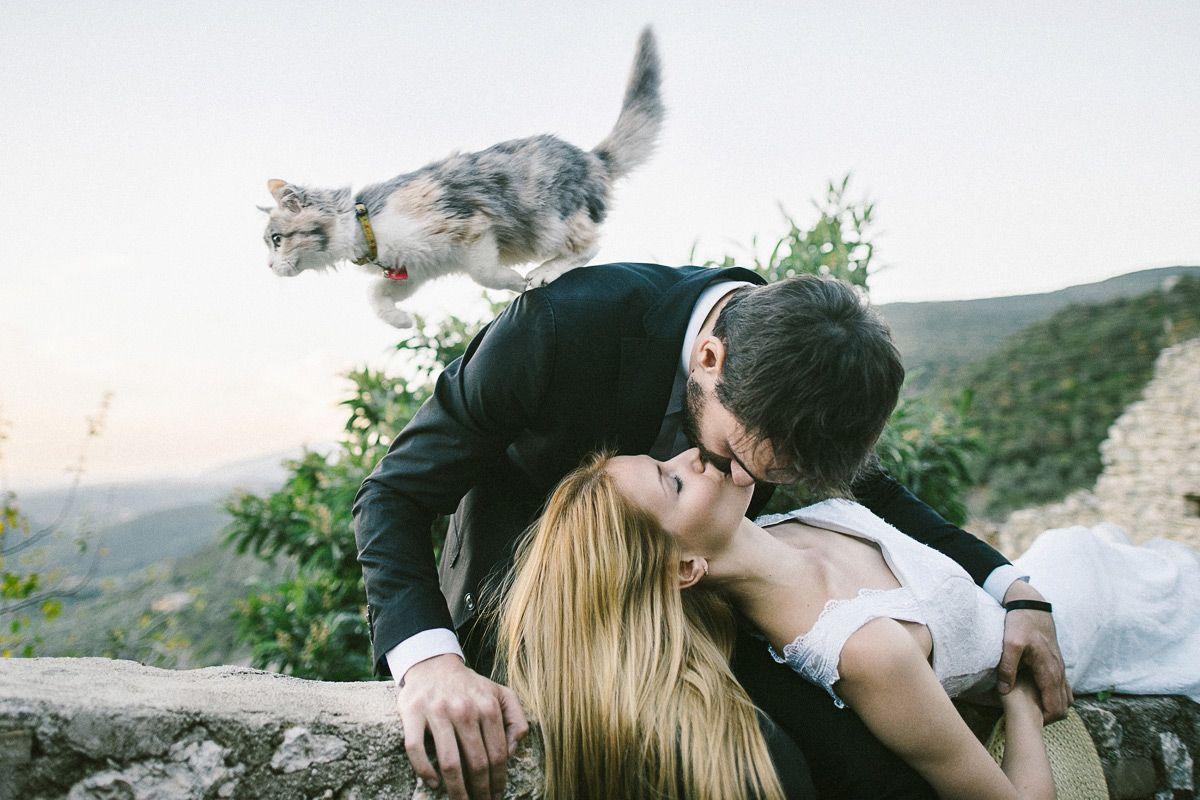 Katzen Hochzeitsfotos