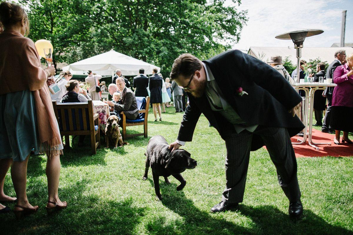 Hochzeit hund